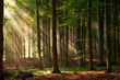 canvas print picture - autumn forest trees. nature green wood sunlight backgrounds.