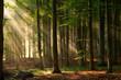 Leinwandbild Motiv autumn forest trees. nature green wood sunlight backgrounds.