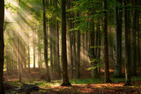 Fototapety autumn forest trees. nature green wood sunlight backgrounds.