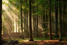 Drzewa las jesienią. charakter zielone światło słoneczne drewna tła.