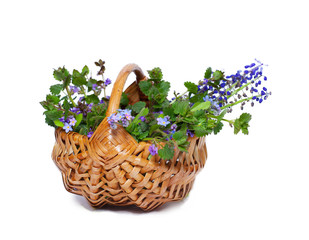 bouquet of wildflowers in basket, isolated on white