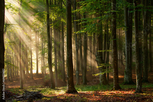 Leinwandbild Motiv autumn forest trees. nature green wood sunlight backgrounds.