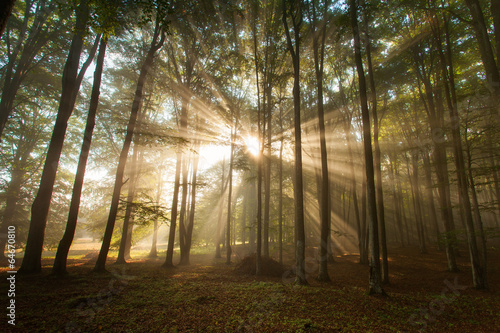 autumn forest trees. nature green wood sunlight backgrounds. - 64670810