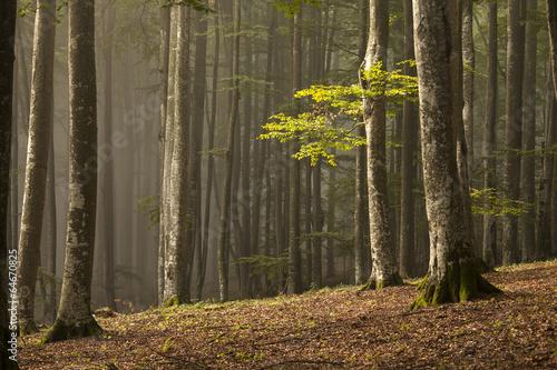 jesienny-dzien-w-lesie