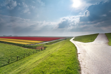 sunshine over Dutch farmland with tulips field