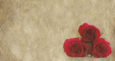 Three red roses on parchment background