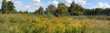 Panorama of meadow in full flower