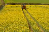 Spraying Rapeseed crop - 64676405