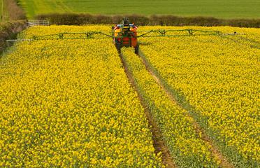Spraying Rapeseed crop