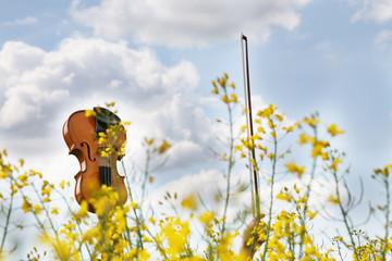 Geige und Geigenbogen in der Luft