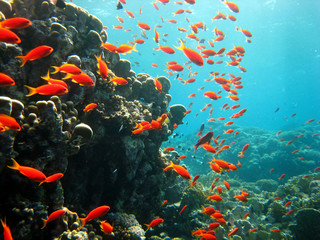 riesiger Fischschwarm rotes Meer