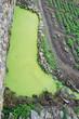 Alberca con plantas acuáticas, Gragantilla, España