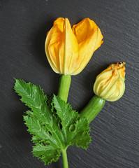 fleurs de courgette