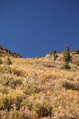 rock on independece pass colorado