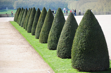 fir-trees in the Versailles garden in Paris