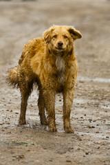 Бродячая собака