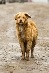 Бродячая собака на обочине дороги