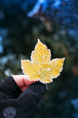 Frozen yellow leaf in adventure man hand