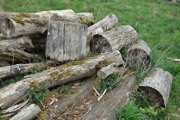 Haufen, verrottete Baumstämme