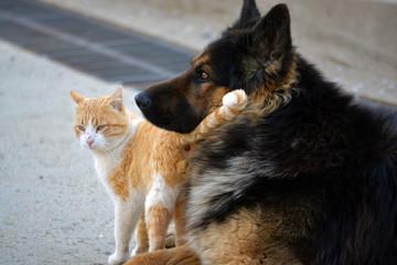 amistad entre perro pastor aleman y gato