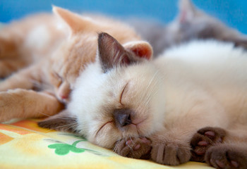 Sleeping little kittens