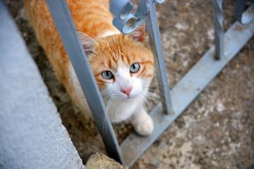 mirada de gato callejero naranja y blanco