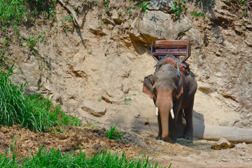 an asian elephant  with howdah for trekking