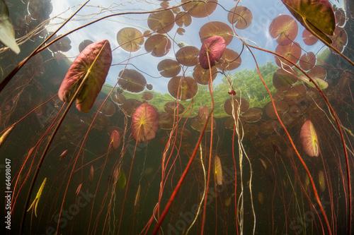 In de dag Water planten Lily Pads in Pond 2