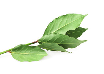 Food  ingredient -  bay leaf