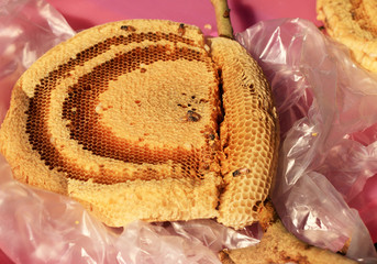Honeycomb on the branch.