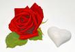 rote Rose weißes Herz
