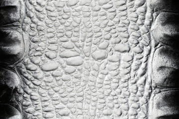 Black and white crocodile skin texture