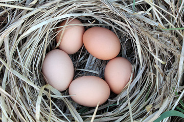 Photo of chicken eggs in a arranging nest - Easter composition
