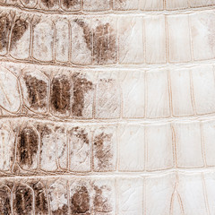 white crocodile leather texture  background