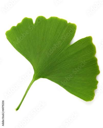 Leinwanddruck Bild green ginkgo biloba isolated on white background