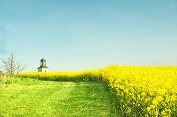 Canola and the church tower behind