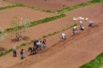 kırsalda tarım işleri&ekip dikmek