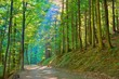 Sun rays in green deciduous forest. Trail in nature reserve.