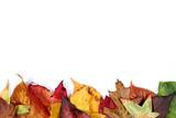 Bord feuilles d'automne