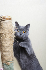British cat scratching posts