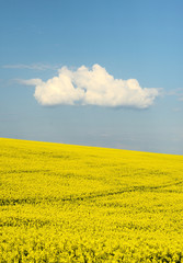 Big cloud on blue sky over yellow rape field