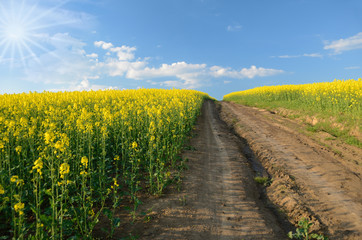 The road to the sky in the middle of rape field on a sunny day