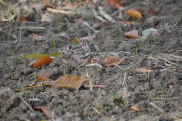 Herbstlicher Ackerboden