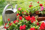 Fototapety Blumenkästen mit Gießkanne