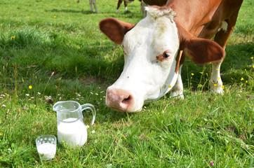 Milk and cows. Emmental region, Switzerland