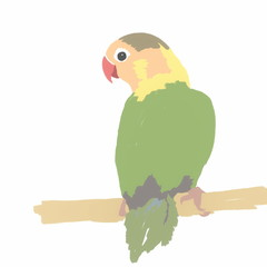 Hand drawn Lovebird isolated on white Agapornis fischeri