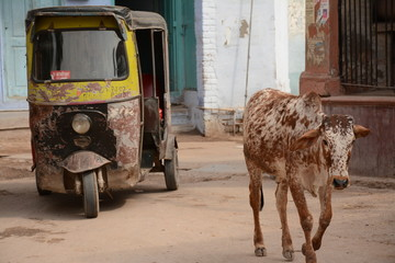 Indian holy cow and ricksha in the street