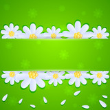 Daisies on green background