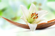 Beautiful white lily flower on a coco palm leaf