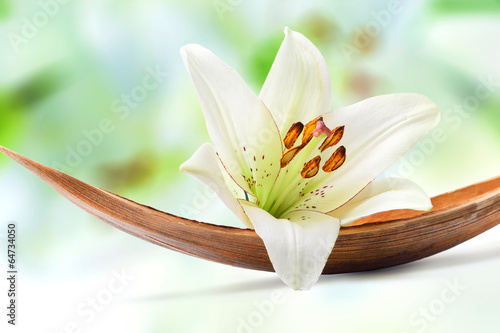 Fototapety, obrazy : Beautiful white lily flower on a coco palm leaf